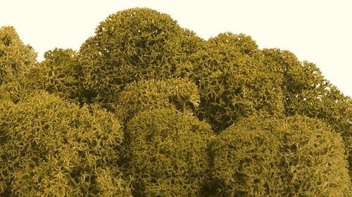 Premium quality moss lime green  for Moss-Images and Moss-Walls