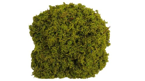 Icelandmoss Moss Flakes May-Green