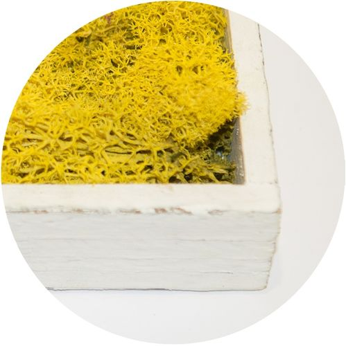 Moss Flakes Lemon-Yellow