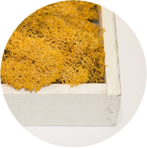 Moss Flakes Natural-Yellow