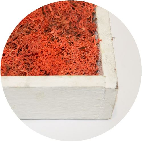 Moss Flakes Sunny-Orange