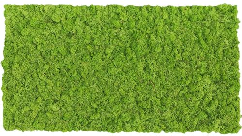 Moss mat grass green 114x57cm as moss picture or moss wall from natural moss Island moss