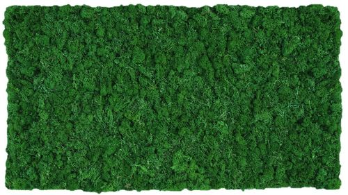 Moss mat leaf green 114x57cm as moss picture or moss wall from natural moss Island moss