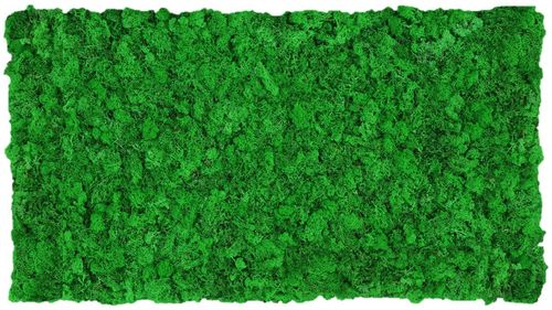 Moss mat apple green 114x57cm as moss picture or moss wall from natural moss Island moss