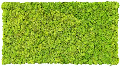 Moss mat may green 114x57cm as moss picture or moss wall from natural moss Island moss