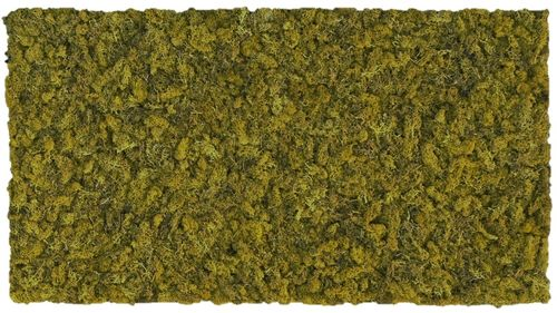 Moss mat olive green 104x57cm as moss picture or moss wall from natural moss Island moss