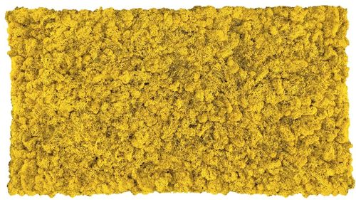 Moss mat lemon yellow 114x57cm as moss picture or moss wall from natural moss Island moss