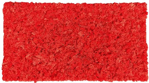 Moss mat cherry red 114x57cm as moss picture or moss wall from natural moss Iceland moss