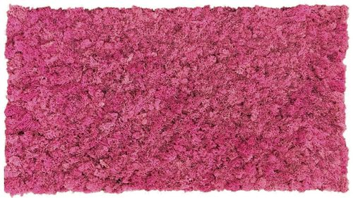 Moss mat fuchsia 114x57cm as moss picture or moss wall from natural moss Iceland moss