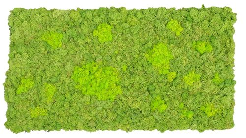 Moss mat two-coloured fluffy 114x57cm as moss picture or moss wall from natural moss Iceland moss