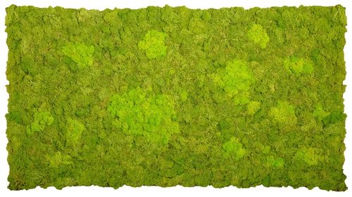 Rental Moss mat two-coloured fluffy may green grass green 104x57cm 0,6m² B1 from Icelandmoos