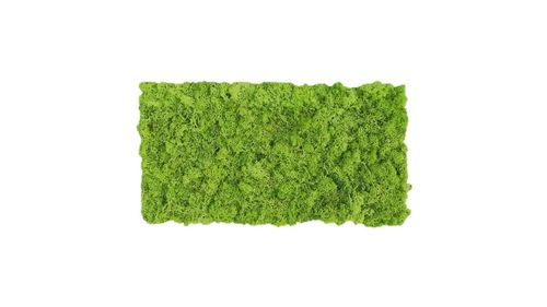 Moss mat grass green 57x28,5cm as moss picture or moss wall from natural moss Island moss