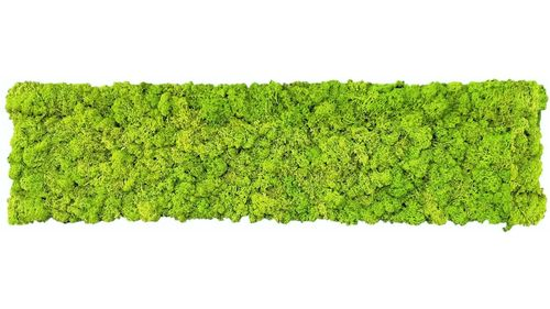 Moss mat may green 114x28,5cm as moss picture or moss wall from natural moss Island moss