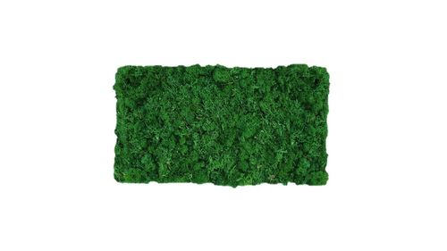 Moss mat leaf green 57x28,5cm as moss picture or moss wall from natural moss Island moss