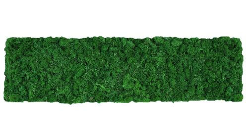Moss mat leaf green 114x28,5cm as moss picture or moss wall from natural moss Island moss