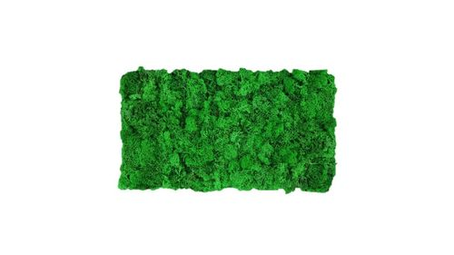 Moss mat apple green 57x28,5cm m as moss picture or moss wall from natural moss Island moss
