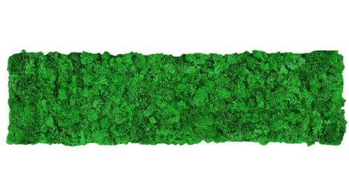 Moss mat apple green 114x28,5cm m as moss picture or moss wall from natural moss Island moss
