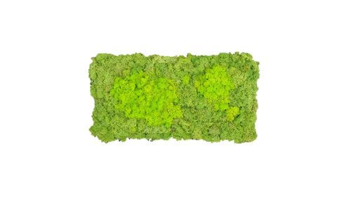 Moss mat two-coloured fluffy 57x28,5cm as moss picture or moss wall from natural moss Iceland moss