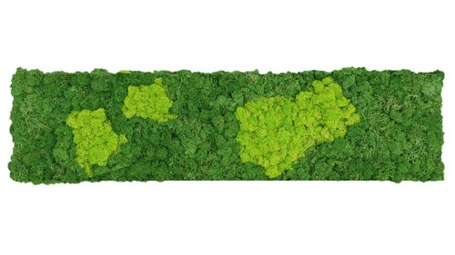 Moss mat two-coloured fluffy 114x28,5cm as moss picture or moss wall from natural moss Iceland moss